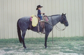 McKeag Blue Roan Stallion owned by Froelich Ranch